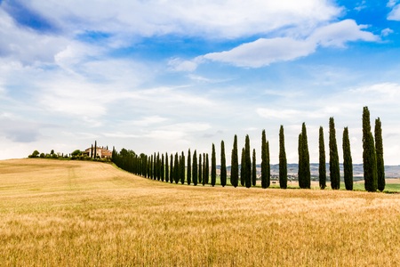 country road flanked with cypresses near San Quirico dOrcia in Tuscany, Italy