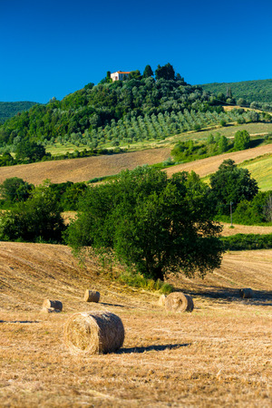 Grosseto, Italy - June 12, 2009: haycock and trees in sunny tuscan countryside, Italy.