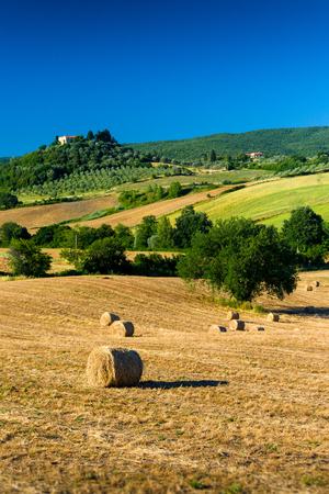 Haycock and trees in sunny tuscan countryside, Italy.