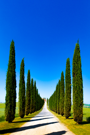 Country road flanked with cypresses in Crete Senesi (Senese Clays), Italy Stockfoto