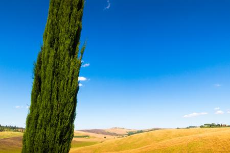 Cypresse on a hill near Asciano in Crete Senesi, Tuscany, Italy