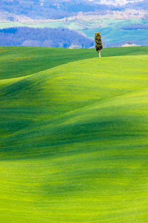 Siena area, Italy. Beautiful view of the country hills in spring