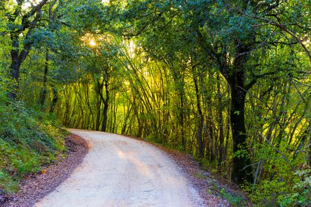 Beautiful road in the wood in autumn at late afternoon in Tuscany, Italy