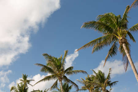 Palm trees and blue skys at the beach.