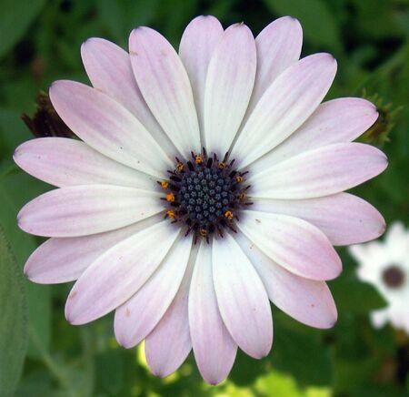 flower, passion,,blossom,detail,flora photo