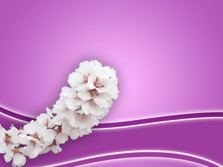 almond bud: almond, flower,agriculture,background,bloom,blossom,branch