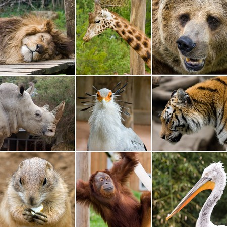 zoo animals: collage photo composition of some wild animals Stock Photo