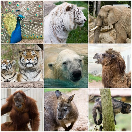 collage photo composition of some wild animals Фото со стока