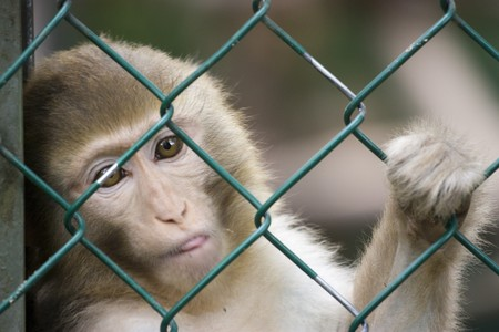 photo of a wild cute monkey at the zoo photo