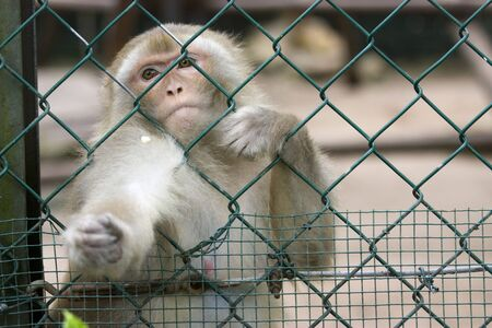 photo of a wild cute monkey at the zoo Stock Photo - 7521425
