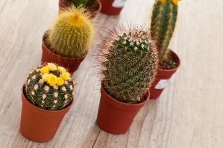 https://us.123rf.com/450wm/digitalsun/digitalsun1109/digitalsun110900014/10643112-little-exotische-spiked-cactus-plant-voor-het-interieur.jpg?ver=6