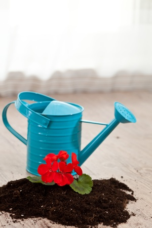 Red flower growing on a raw soil photo