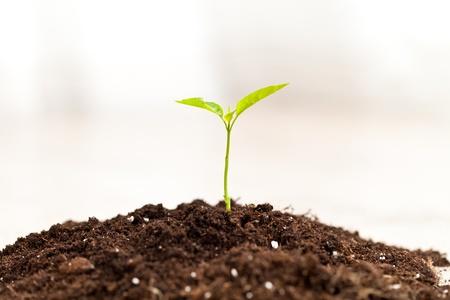 Little plant growing in a fresh soil