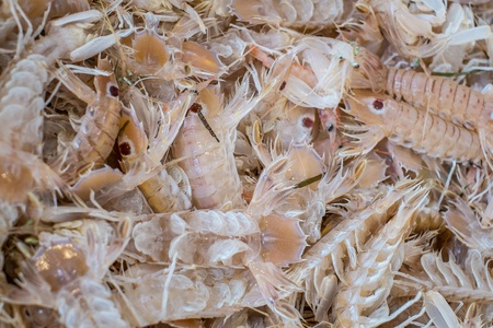 Fresh mantis shrimps on sale at the market in south of Italy photo