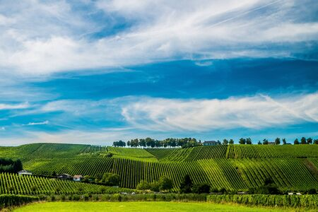 Hill s covered by vineyards along the Moselle river in Remich, Luxembourg Stock Photo