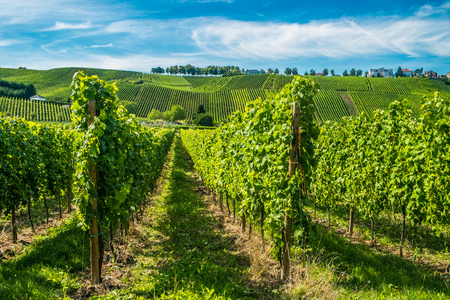 Hill s covered by vineyards along the Moselle river in Remich, Luxembourg Standard-Bild