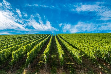 paysage: Hill s covered by vineyards along the Moselle river in Remich, Luxembourg Stock Photo