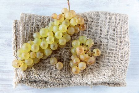 whine: Fresh white whine grapes on jute cloth