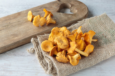 cantharellus: Bunch of fresh raw cantharellus mushrooms Stock Photo