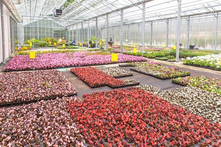 vivarium: Plants growing in a modern greenhouse