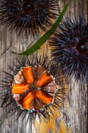 Fresh sea urchins from south of Italy, Puglia region Stock Photo