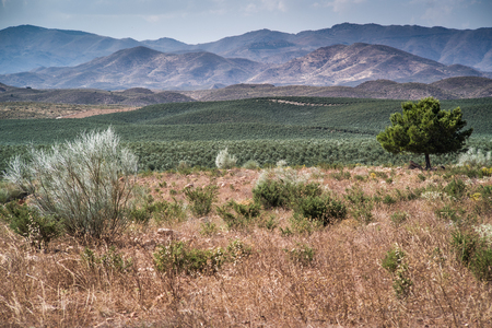 sierra nevada: Wonderful landscapes in the desert of Tabernas, Andalusia, Spain
