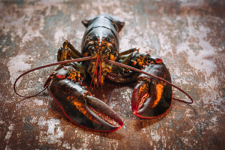 Fresh alive lobster from atlantic sea for a gourmet meal