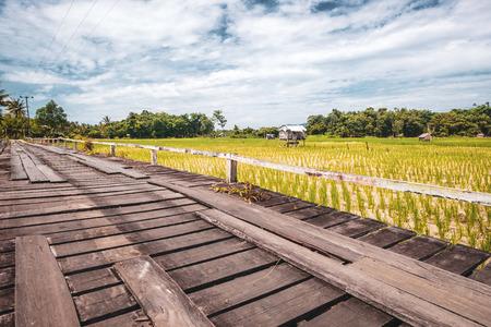 Pola ryżowe w okolicach Kuching Zdjęcie Seryjne