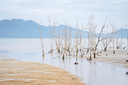 Dried trees in the Bako national park