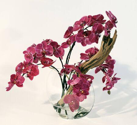 Flor Foto de archivo - 67750442
