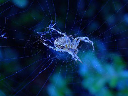 creepy spider photo