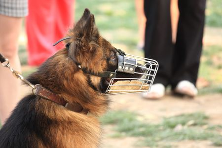 The police-dog defends safely hes proprietress photo