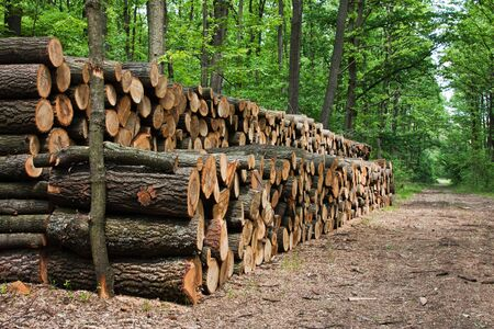 A big pile of wood in a forest road Stock Photo - 7973604