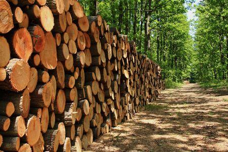 林道における木材の大きい山 写真素材 - 8324429