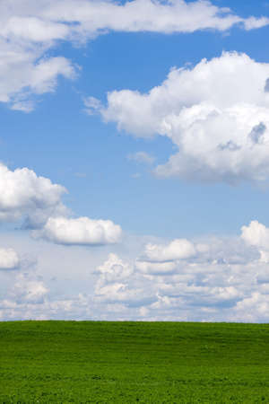 A beautiful green field with white clouds Stock Photo - 8452200