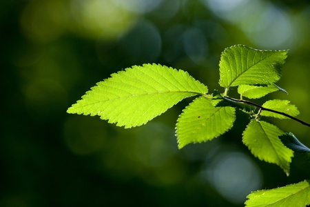 Beautiful, harmonious forest detail Stock Photo - 8464010