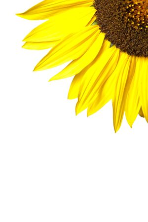 Beautiful flower detail on a white background Stock Photo - 8580876