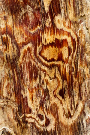 Nice pattern pine trunk photo