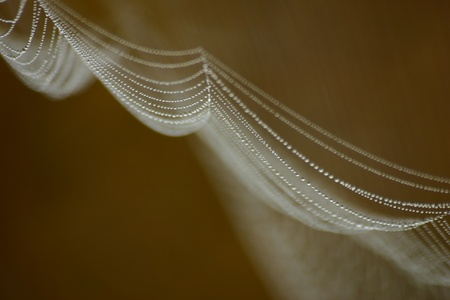 Spiderweb with drops  photo