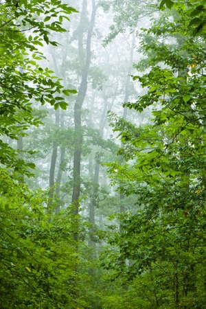 Beautiful misty autumn forest Stock Photo - 8964526