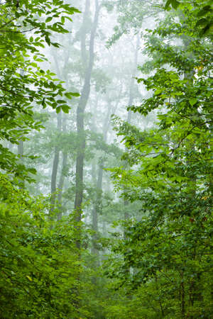 Beautiful misty autumn forest Stock Photo - 8964526
