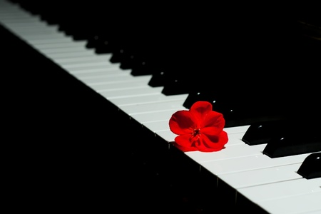 Harmonious detail of a black piano and a red flower