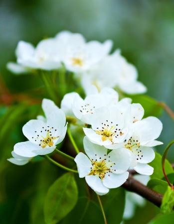 Beautiful white flowers in close up Stock Photo - 9072971