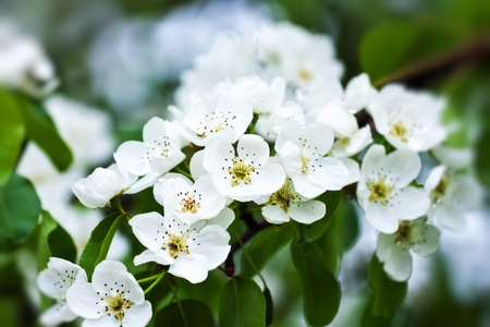 Beautiful white flowers in close up Stock Photo - 9072965