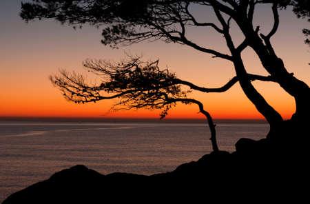 Beautiful beach at sunrise wih trees Stock Photo - 9139322