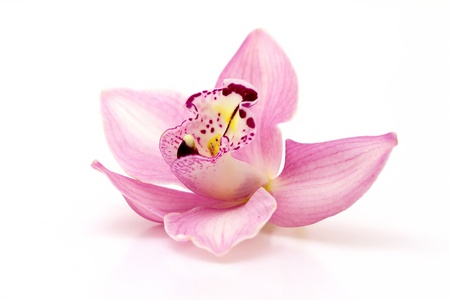 Beautiful pink orchid on white background  photo