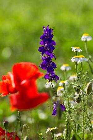 Beautiful flower meadow photo