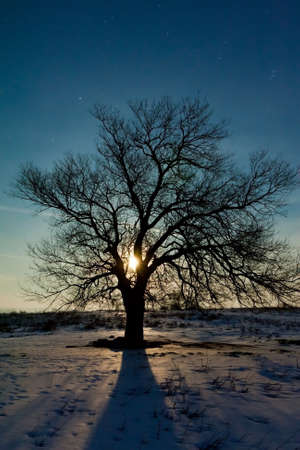 Moon,beautiful trees and snow photo