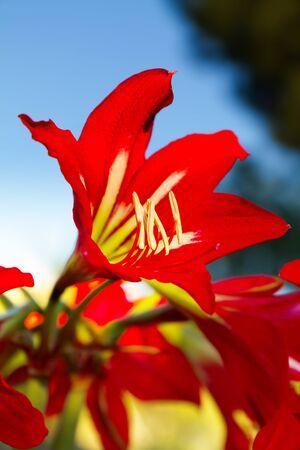 Beautiful lily flower Stock Photo - 9689683