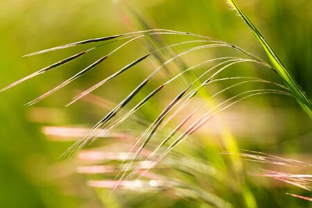 Beautiful, harmonious picture from a blade of grass Stock Photo - 10134051